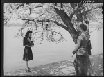 cherry blossom 1941 kid tree
