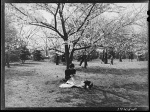 Cherry blossoms 1941 reading