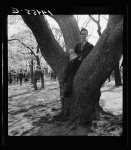 cherry blossoms man w baby in tree 1941